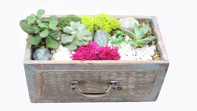 Plant Nite: Succulents in Wooden Drawers