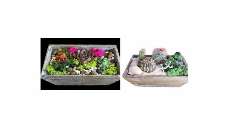 Plant Nite: Succulent or Cacti Mix-N-Match